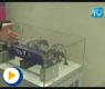 英威腾旗下品牌产品介绍——2011工博会 现场视频采访